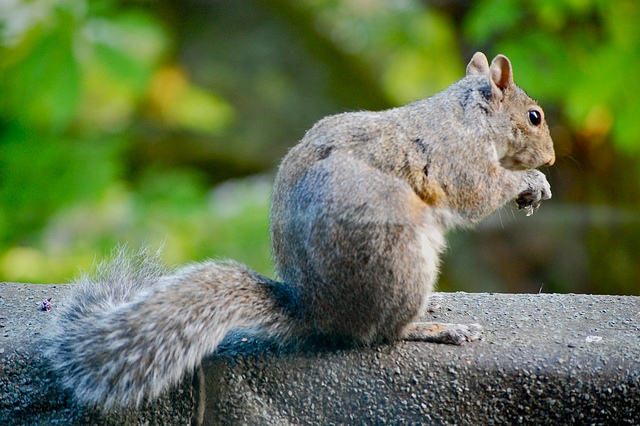 A lovely squirrel (via include + data)